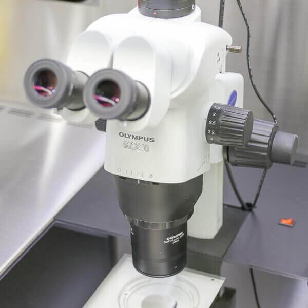 システム実体顕微鏡